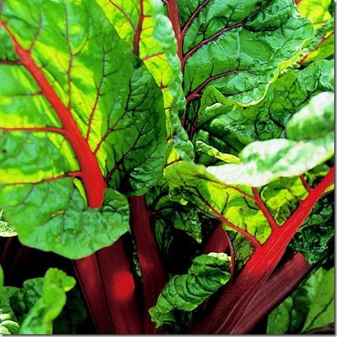 beet-leaf-chard-rhubarb-organic-seeds