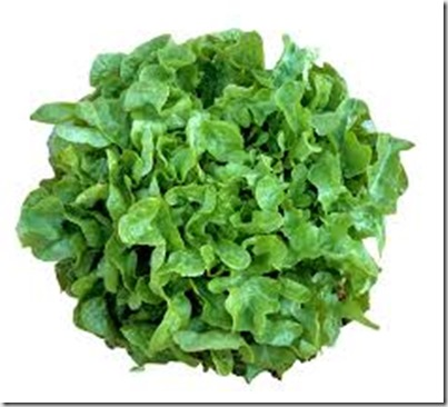 fresh-green-oak-leaf-lettuce-25848843